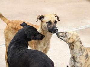 AYUNTAMIENTO DE VILLA DE REYES REINICIA CAMPAÑA DE ESTERILIZACIÓN DE ANIMALES EN EL MUNICIPIO